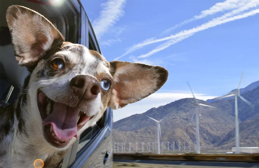 Смешные картинки и фото с собаками, класс свадебная